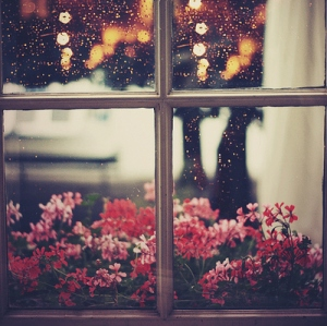 bokeh-flowers-rain-raindrops-window-Favim.com-47512